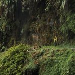 Robb Pritchard feature: LETHAL BEAUTY. Death road, Bolivia, in a land rover