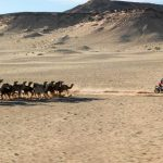 AFRICA ECO RACE : FROM MONACO TO DAKAR, IN RALLY'S PUREST TRADITION