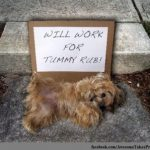 TUMMY RUB – but money is better