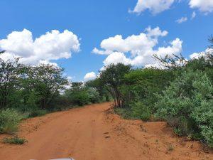 A pure bushveld scene welcomed us at Rallystar.
